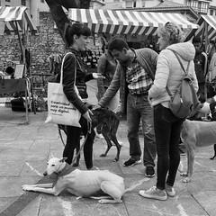 Dog People (solas53) Tags: dogs people dog perro street spain gijón asturias candid blackwhite bw blackandwhite black white monochrome standing urban animals