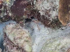 Bonaire diving 2018 (Valerie Hukalo) Tags: bonaire antilles caraïbes paysbas nature patrickhukalo diving plongée plongéesousmarine photographiesousmarine underwaterphotographe buddydiveresort