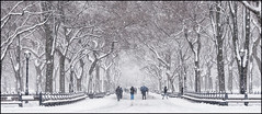 A Spring Day in Central Park (ZinBoy) Tags: themall centralpark snow snowfall spring trees americanelm benches