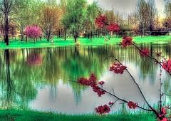 * Spring feeling at the pond * (argia world 1) Tags: laghetto pond plaincountryside pianurapadana primavera spring fioritura blossoms alberi trees riflessi reflections erba grass