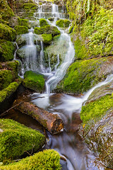 Badger Falls Log (alan.dphotos) Tags: rock rocks trees forest wood woods branches tree moss green leaves leaf waterfall heather copper grass hill whitewater badgerdinglewaterfall badgerdingle bridgenorth shropshire landscapephotography water stream river