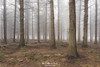 Decidious (Mimadeo) Tags: forest tree trees bark bare winter autumn log logs trunk trunks deciduous conifer coniferous landscape fog foggy mist misty morning bright brown wood woods nature natural scene pine pines
