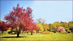 Near Heaven (farmspeedracer) Tags: nature may mayo mai germany park tree sky 2018 beauty landscape garden blue blau red rouge rot meadow pink green bloom cherry leaf leaves rest peace