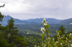 Flowers & Mountain Views (s.d.sea) Tags: flowers flower wildflower mountain mountains landscape floral flora cloudy overcast little mt si mount peak summit view vista hike hiking pnw pacificnorthwest pentax k5iis washington washingtonstate north bend spring grow