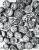 Betel Nuts (Genius Wizard) Tags: supaari arecanut india assam northeastindia silchar bhuwanhills