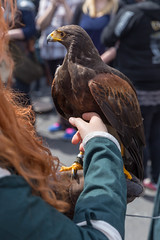 Mädchen streichelt einen Adler (marcoverch) Tags: cosplay cologne rpc roleplayconvention köln roleplay rollenspiele mädchen streichelt adler bird vogel wildlife tierwelt portrait porträt eagle people menschen one ein outdoors drausen raptor raubvogel adult erwachsene two zwei nature natur daylight tageslicht fly fliege hawk falke falcon flight flug wing flügel zoo falconry falknerei animal tier noiretblanc eau blur australia aircraft europe nyc texture abandoned coth5