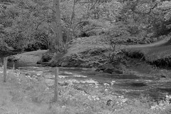 RiverDane (Tony Tooth) Tags: nikon d7100 nikkor 35mm f18g bw blackandwhite monochrome river stream brook riverdane countryside danebridge staffs staffordshire cheshire england