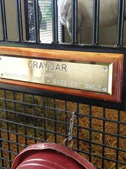 Graydar (atthepaddock) Tags: thoroughbred claiborne graydar picturesofhorses