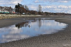 East Beach - White Rock (SonjaPetersonPh♡tography) Tags: whiterock whiterockpromenade whiterockpierpromenade whiterockpier bc britishcolumbia canada nikon nikond5300 beach eastbeach railway southsurrey tide sand water ocean pacificocean pacificnorthwest trains bnsf burlingtonnorthernsantaferailway reflections waterreflections rocks rocky landscape waterscape