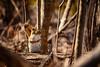 Warmer Days Ahead (flashfix) Tags: april212018 2018inphotos ottawa ontario canada nikond7100 55mm300mm nikon flashfix flashfixphotography portrait nature mothernature rodent squirrel redsquirrel branches