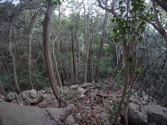 Taketani vSW _orig_LG23 (Hazbones) Tags: iwakuni yamaguchi yokoyama castle kikkawa suo chugoku mori honmaru ninomaru demaru wall armor samurai spear teppo gun matchlock map ropeway