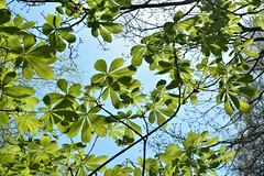 DSC_0262 (KYLee96) Tags: lakedistrict lake unitedkingdom greatbritain countryside nationalpark lightblue sky sunny sunshine scenic scenary landscape green leaves