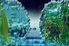 Guess what it is. A special kind of fish? (Gudzwi) Tags: sparklingwater water waterdrops wassertropfen wasser sprudelwasser blau blue türkis turquoise grün green blueandgreen blauundgrün 7dwf 7dwfcrazytuesdaysthemeguesswhatitis guesswhatitis crazytuesdaytheme ctt adivinaquées ratewasesist