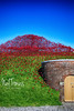 Red and Green in a wave (Neyol) Tags: poppy wave fort nelson portsmouth