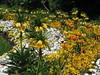 Garten mit Kaiserkronen (swetlanahasenjäger) Tags: landesgartenschau eutin kaiserkronen tulpen goldlack tausenschön weissrotgelbgrün mai 2016 frühling coth5 fantasticnature