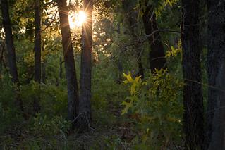 Georgia sandhills at sunset