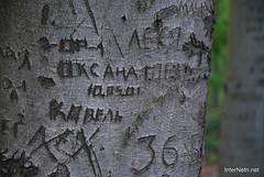 Ботанічний сад імені Гришка Буковий гай InterNetri  Ukraine 106