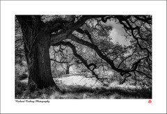 Feelers Out (Chalky666) Tags: tree trees wood woodland forest spring southdowns westsussex landscape art mono