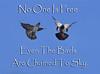 sky Birds (GuriCreations) Tags: sky skylover skyhigh pigeons life nature blue quote guricreations naturelover natureclicks nikon asia naturefreak fauna cutecouple birdcouple positive vibes