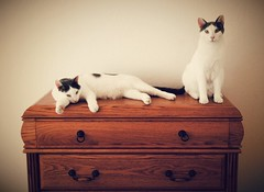 Where One Goes The Other Follows (Sarah_ES) Tags: 7dwffauna cats two furniture