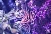 S.E.A Aquarium, Singapore (Jared_Rawlins) Tags: blue nikon landscape beautiful asia march asian singapore sentosa universalstudios landscapephotography dark travelbloggers neonlights ilovesingapore modernart lights nighttime flickr infinite night neon photography sky beautifulmatters red photographer universal