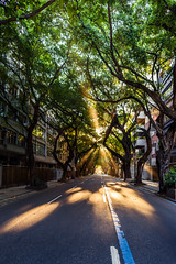 Naturaleza emergente (Osei Casanova) Tags: nikond750photography sudamerica sunset street nikonphotographer vacation riodejaneiro holiday brasil trees bestoftheday oseicd lightstroke nikonphotography park america osei picoftheday photooftheday brazil br