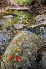 HT5A9216.jpg (Stephen C3) Tags: fall arborhillsnaturepreserve river