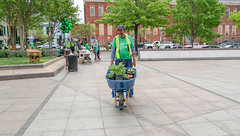 2018.05.06 Vermont Avenue, NW Garden - Work Party, Washington, DC USA 01783