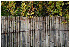 061 of 365 - Fence (Weils Piuk) Tags: photoblog365 fence edge reed plants nature border wire separation tree green gray house minimalist texture