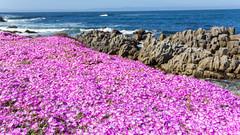 IMG_8432 (boguscoder) Tags: pacificgrove california unitedstates us