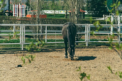 Spruce Meadows (Velates) Tags: calgary spruce meadows spring horses