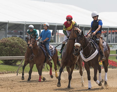 2018 Pimlico Race track (35) (maskirovka77) Tags: pimlico dirt mare race racehorse threeyearold turf yearling