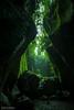 Jungle Mountains (8793-2) (Stefan Beckhusen) Tags: jungle rainforest mountains tropic gorge ravine nature narrow palms palmtrees fern plantas vegetation rocks green color day outdoors hiking explore discovery bali indonesia tukadcepungwaterfall
