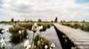 Eifel belge (Lцdо\/іс) Tags: eifel fagnes fagnard fantasticnature nature naturelle venn venen belgique belgium belgie beauty travel linaigrettes paysage panorama eupen eau treking trekking promenade
