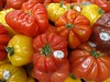 Sunday Colours - Summer is Just Around the Corner (Pushapoze (NMP)) Tags: tomatoes heirlooms red yellow greenhouse