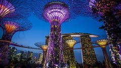 Singapore  Gardens by the bay tickets price (niharikapatel28) Tags: singaporegardensbythebayticketsprice singapore gardensbythebay