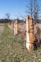 Flint Fence - HFF! (RPahre) Tags: flinthills nebraska homesteadnationalmonument homesteadnationalmonumentofamerica homestead fence stonepost limestone hff fencepost