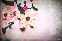 I Awoke to Spring (MBates Foto) Tags: availablelight botanicals color daylight existinglight flower nikkorlens nikon nikond810 nikonfx outdoors plants texture spokane washington unitedstates 99203 bokeh close focus