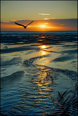 Flying into the Sun (angelofruhr) Tags: greatphotographers france frankreich normandie strand ebbe lowtide sunset refektionen möwe reflexions