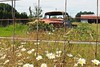 Auto Mechanic Wanted (PDX Bailey) Tags: truck rural fence flower yellow vine