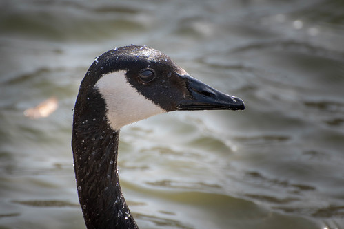 DuckPond20180429-DSC_1050.jpg