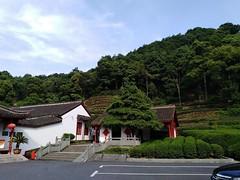 Hangzhou Tea Plantation (2) (ashwar.geo) Tags: hangzhou forestpark teaplantation shongcheng westlake