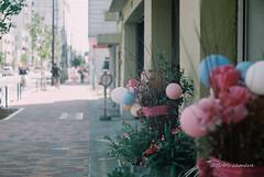 Leica Ⅲa  Som Berthiot Flor 75mm f2.8 (L)  FUJICOLOR C200 (Camera of Bob) Tags: leicaⅲa  somberthiotflor75mmf28l  fujicolorc leicaⅲa  somberthiotflor75mmf28l  fujicolorc200 leica ⅲa som berthiot flor 75mm f28 l fujicolor c200