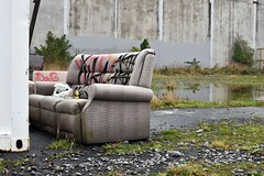 couch (stephen trinder) Tags: stephentrinder stephentrinderphotography aotearoa kiwi couch sofa settee dumped rubbish thecouchesofchristchurch