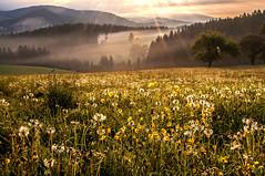 Morgentau im Strahl des Sonnenlichts (Mariandl48) Tags: sonnenaufgang sohnenstrahlen sommersgut wenigzell steiermark austria