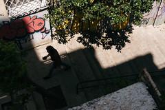 DSCF1483 (KirillSokolov) Tags: istanbul turkey tr street travel fujifilm fujifilmru xtrance mirrorless trip daylight people kirill sokolov кирилл соколов путешествия путешествие трип турция стамбул фуджи беззеркалка стрит