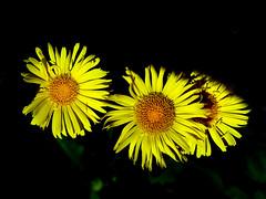 BLÜTEN (roland gruß) Tags: blüten