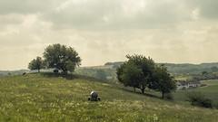 Eifel (Netsrak) Tags: dunst eifel europa europe landschaft maar natur schalkenmehren haze landscape nature kuh