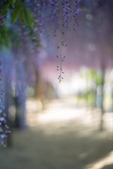 (rosemary*) Tags: 2018 5d planart1450 wisteria