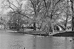 East Park Lake Monochrome (brianarchie65) Tags: eastpark eastyorkshire kingstonuponhull kingswood hullkingstonrovers lakes lake geese trees water slide bughotel unlimitedphotos ngc flickrunofficial flickruk flickr flickrcentral blackandwhite blackandwhitephotos blackandwhitephoto blackandwhitephotography canoneos600d geotagged brianarchie65 colettatyson logs